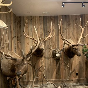 Wallhanger Bucks and Bulls