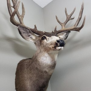 monster-muley-3.jpg
