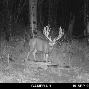 Crazy Cool Monster Muley