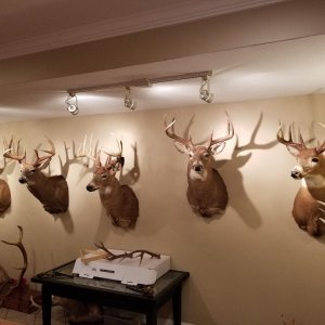 deer mounts.jpg