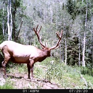 Big Bull Trail Camera Photo