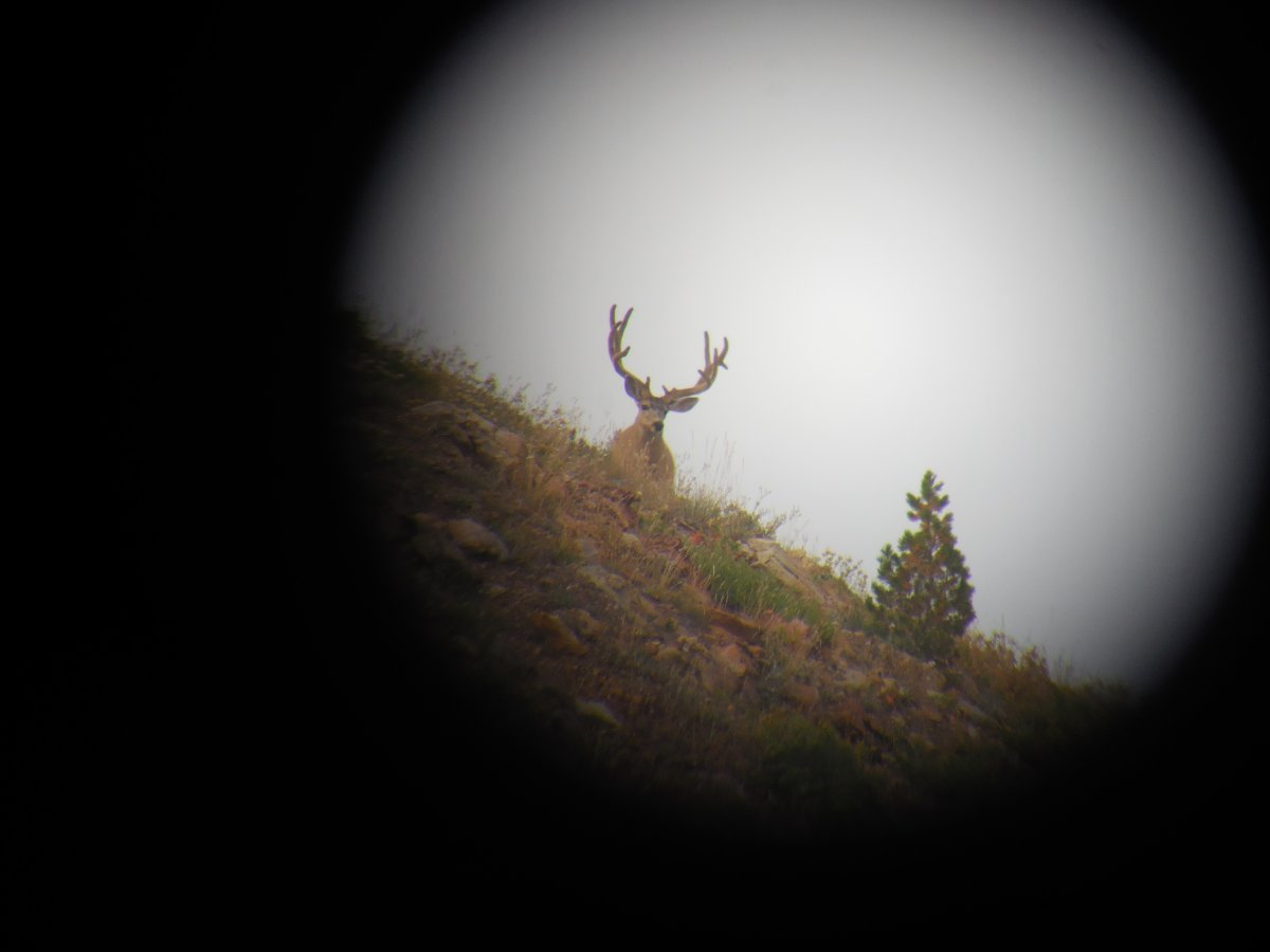 High Country Wyoming Buck